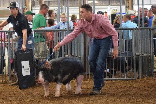 Peyton Phillips, New Carlisle, maintains eye contact with the judge.