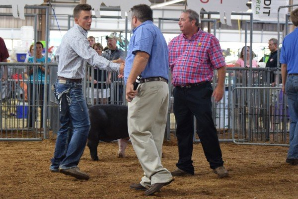 Mason Creager, Wauseon, shakes the hand of the judge after winning Champion Hampshire Barrow.