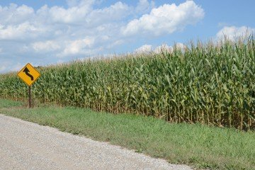 Defiance Co. corn