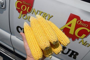 Fulton Co. corn