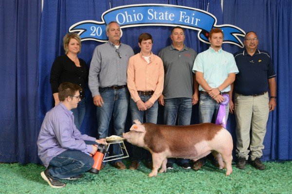 The Champion Hereford exhibited by Cameron Shellhouse of Sycamore sold to Buckeye Barrow Boosters and United Producers for $1,300.