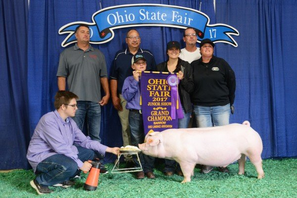 The Champion Landrace exhibited by Peyton Bumgardner of South Vienna sold to Buckeye Barrow Boosters, Sunrise Co-op, Lensman Showpigs, Woodruff Feed and Fence and United Producers for $1,700.