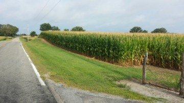Miami Co. corn