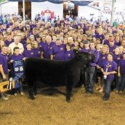 The Athens County Fair Junior Livestock Sale featured a sea of purple shirts in memory of the late Noah Cox, whose grand champion steer was shown by Austin Pullins. Photo by Raven Williams.