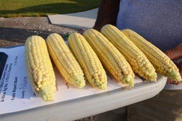 Putnam Co. Corn