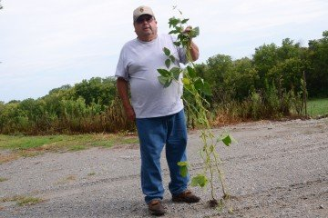 The beans were the tallest we've seen in Warren County.