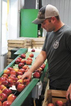 Ben Burrer is a full-time firefighter who still helps his parents on the orchard.