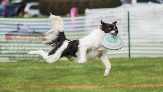 Conley and Dorothy did very well in the disc toss. Photo by Taila Lewis.