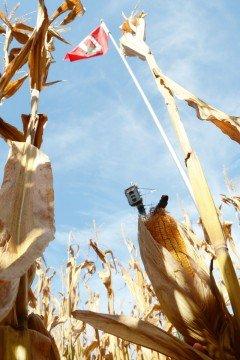 Terra harvest3
