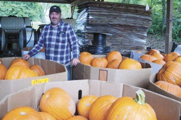 The large pumpkins this year can make filling orders a challenge.