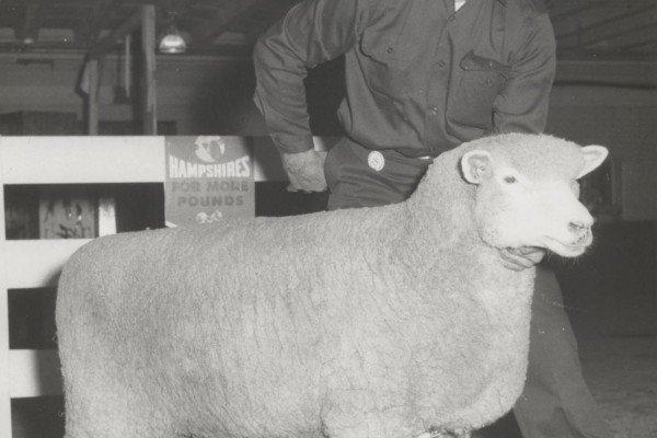 Kin Al with Champion ewe 1970