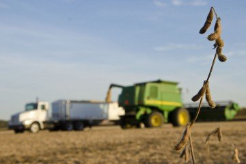 These high oleic soybeans on Motter's farm help meet consumer demand and improve profitability.