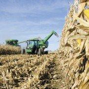 Profit corn harvest