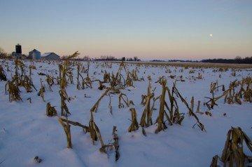 winter moon and corn