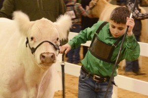 Junior Showmanship