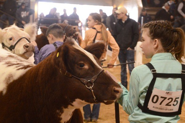 Delaney Chester from Warren County had the Res. Champion Shorthorn Plus Heifer