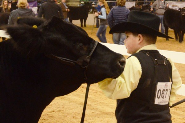 Carter McCauley, Guernsey County with his Champion Simmental steer