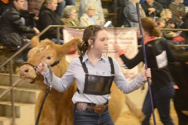 Chelsey Zurface, Clinton County with her market heifer.
