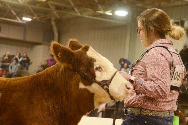Alexa Bockelman, Henry County, with her crossbred steer