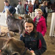 Aubree Topp Shelby County and Lydia Kaverman Clark County lead their Jersey Summer yearling..