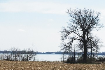 "The ""distressed"" designation in Grand Lake St. Marys led to a ban on winter manure application and placed strong emphasis on other nutrient management practices for farms in the watershed."