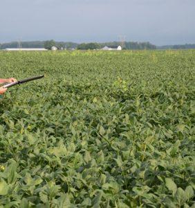 Mercer Co bean field