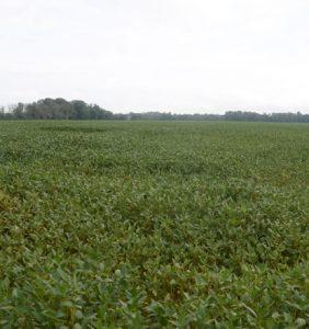 Montgomery Co. bean field