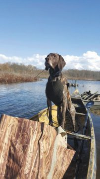 North American Versatile Hunting Dog Association provides invaluable training and fellowship - Ohio's Country Journal and Ohio Ag Net 1