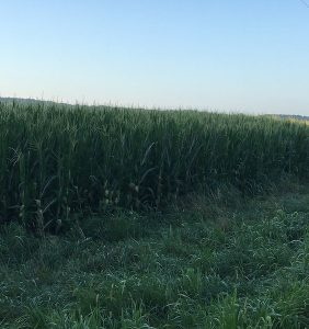 PFTour19_Day1_Stop1_IMG_3830